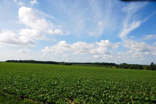 Bierwart : paysage